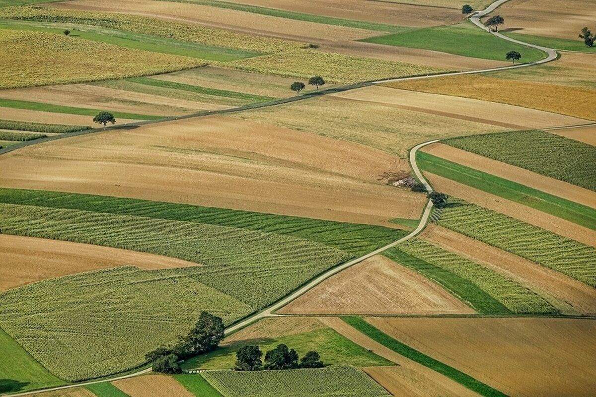Как участвовать в аукционе на земельный участок: этапы и порядок проведения земельных торгов